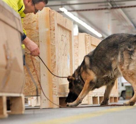 S. K9 Deteccion_Mesa de trabajo 1